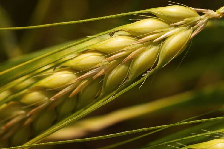 Agribusiness: building a fertile career